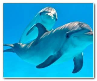 So?ar Con Delfines