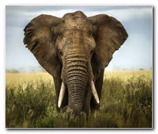 Soar con Elefantes