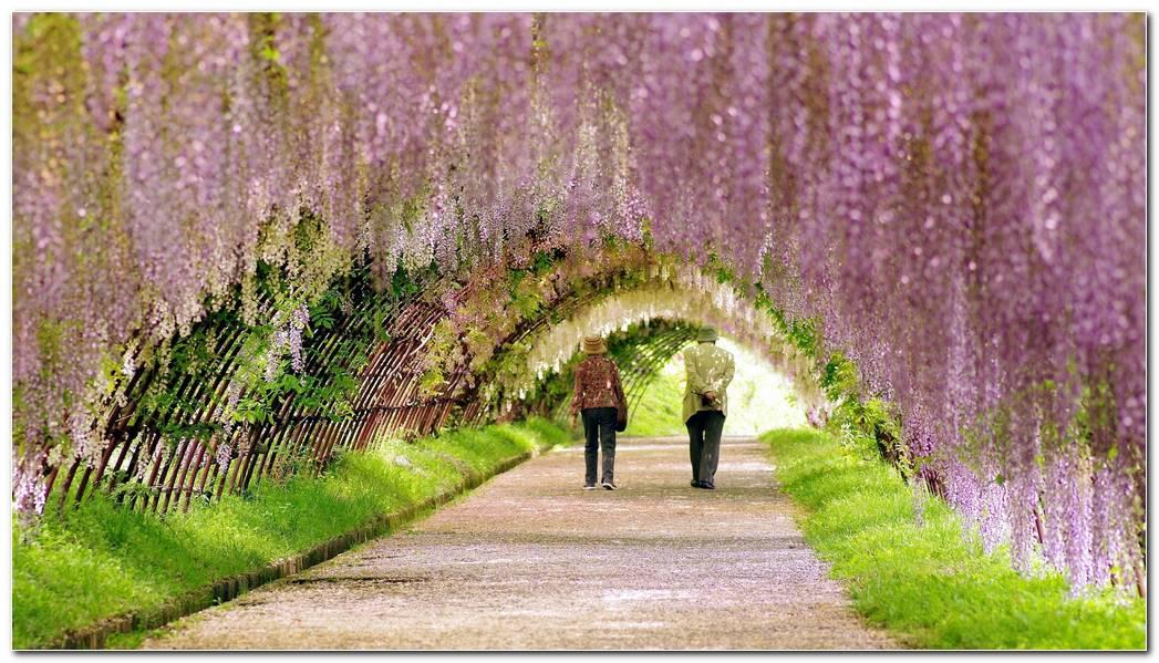 Spring Garden Wallpapers 1920x1080 ImageBankbiz 1920x1080