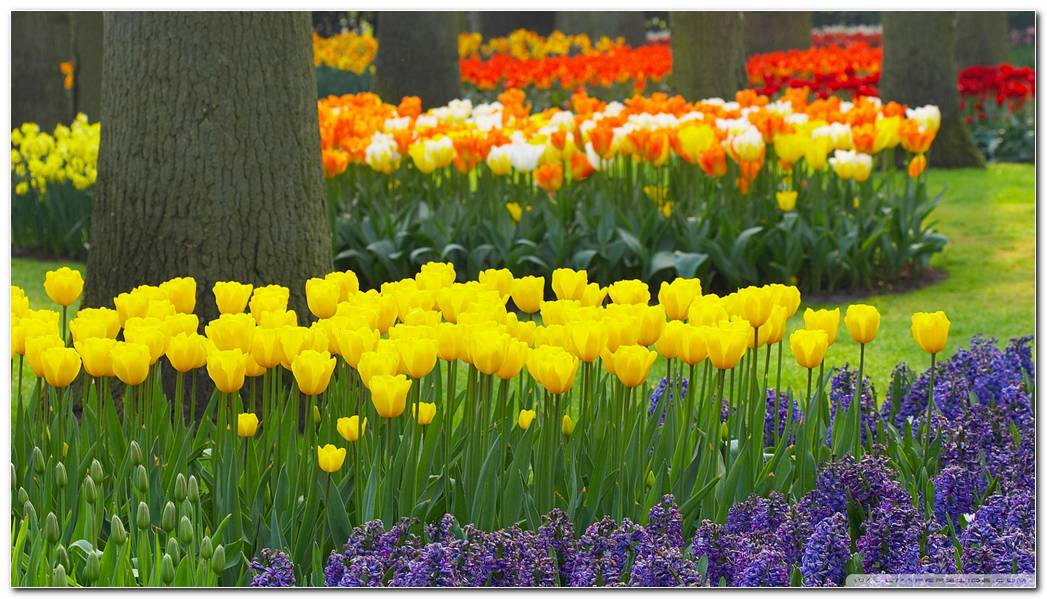 Spring Wallpaper Hd 1920x1080 1920x1080 Spring Garden 1920x1080