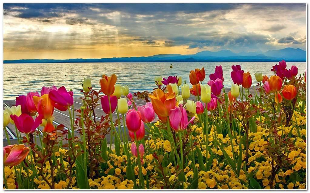 Stunning Wildflower Wallpapers Background