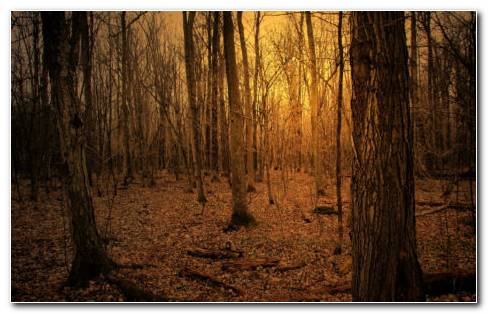 Stunning Forest Photography HD Wallpaper