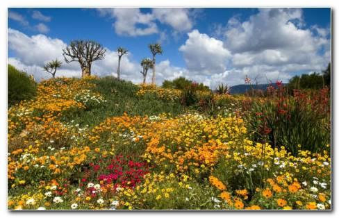 Stunningly Beautiful Nature HD Wallpaper