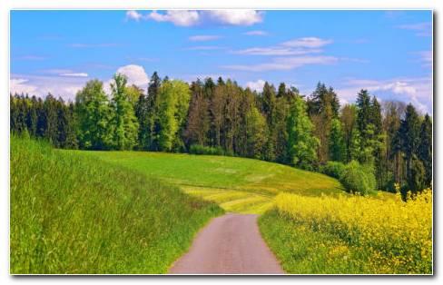 Summer Green Landscape HD Wallpaper
