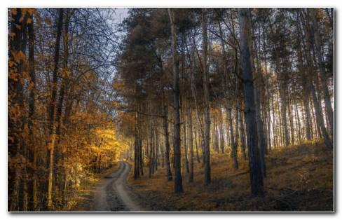 Sunlight In Forest HD Wallpaper