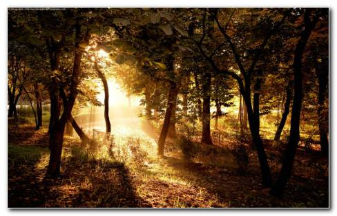 Sunlight In The Forest HD Wallpaper