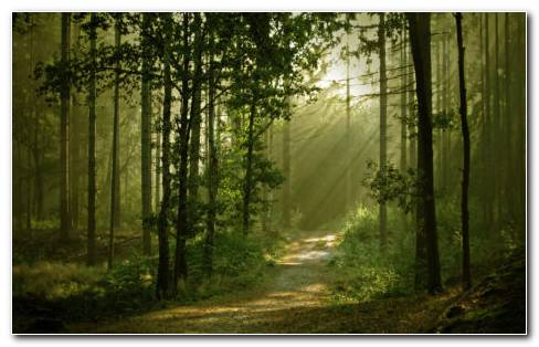 Sunlight Through The Forest HD Wallpaper