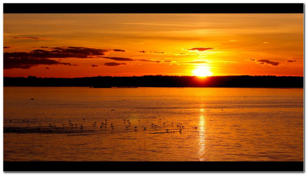 Sunrise And Sunset Birds Nature Wallpaper Background