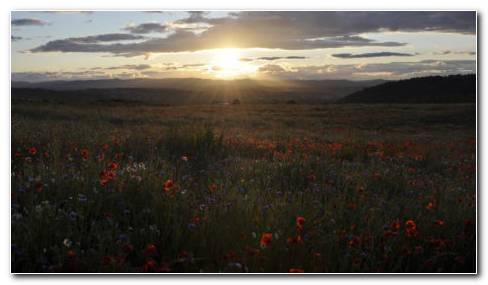 Sunrise On The Poppy Field HD Wallpaper