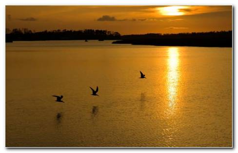Sunset Birds HD Wallpaper