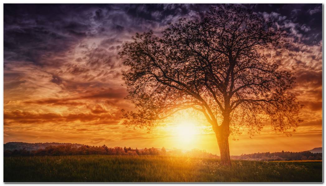 Sunset Nature Trees Wallpaper