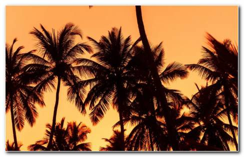 Sunset Palms HD Wallpaper