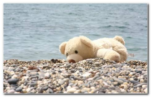 Teddy Bear On The Beach HD Wallpaper