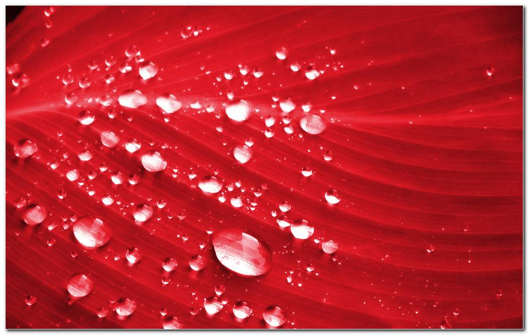 Texture Water Drops Style On Red Background Wallpaper