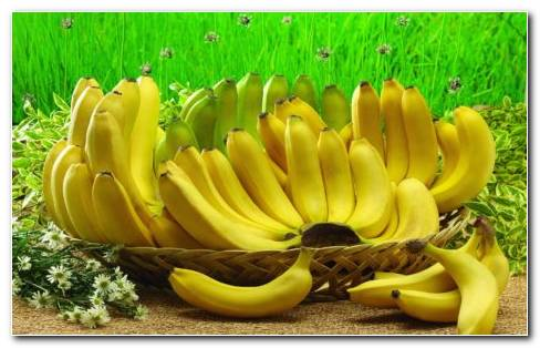 The Banana Basket HD Wallpaper.jpg
