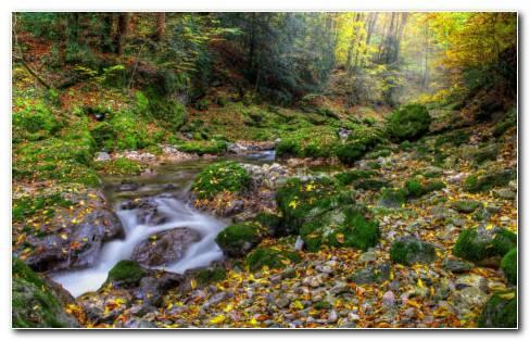 The River Rocks HD Wallpaper