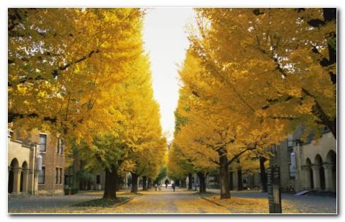 Tokyo University HD Wallpaper