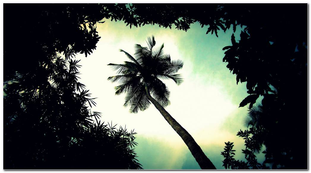 Top Desktop Palm Tree Wallpaper Background