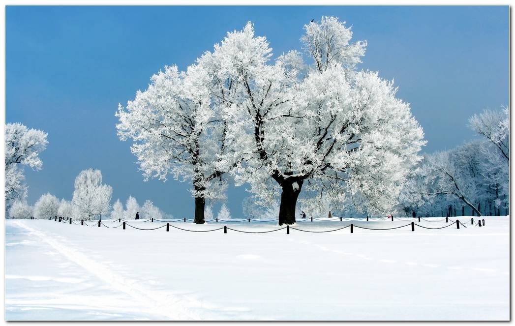 Top Winter Snow Nature Desktop Wallpaper Background