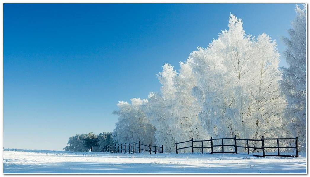 Top Winter Snow Nature Wallpaper Background