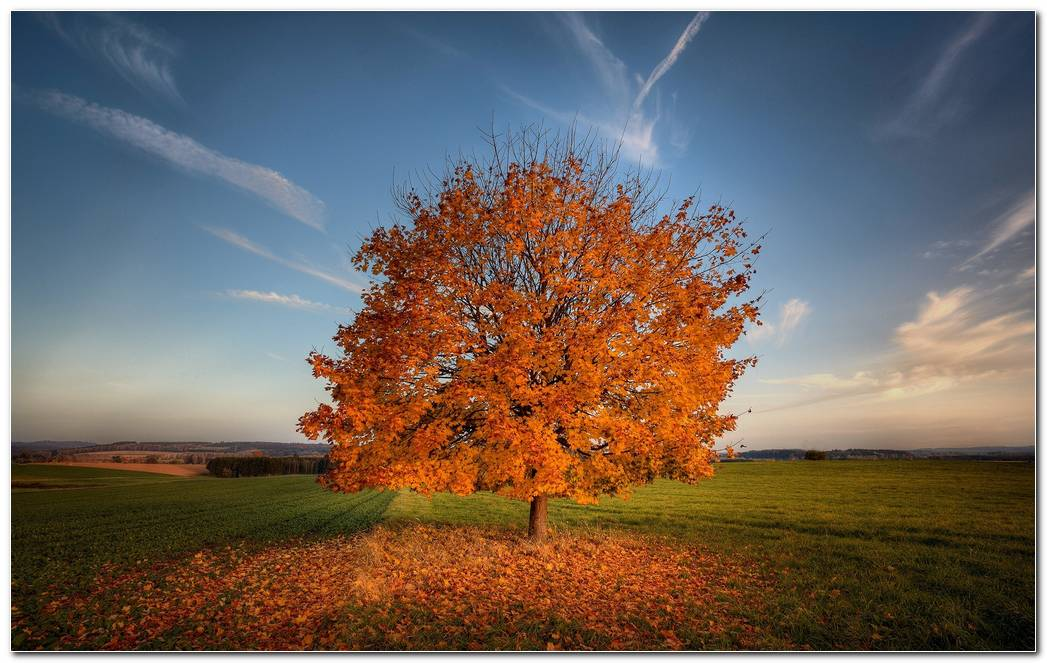 Tree Autumn Wallpaper Hd