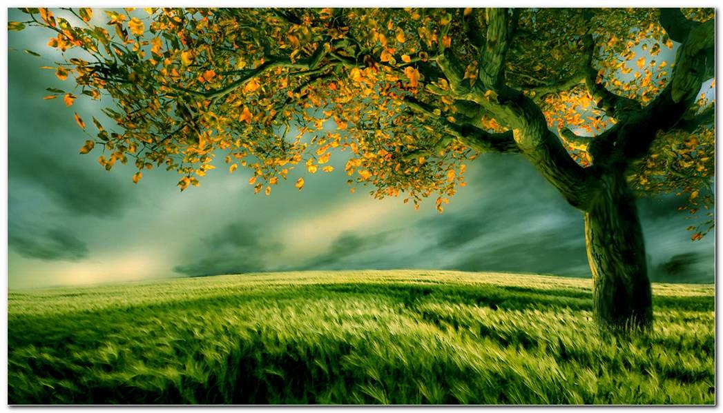 Tree Wallpapers Desktop Background