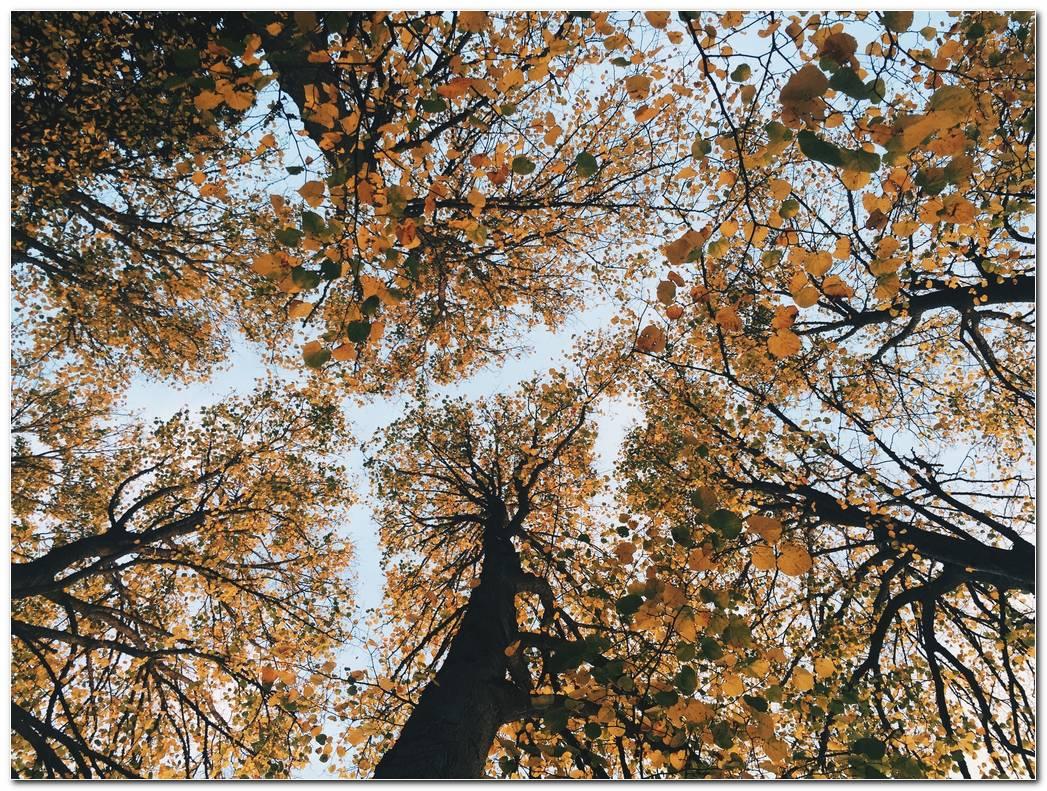 Trees Autumn Wallpaper Desktop Image