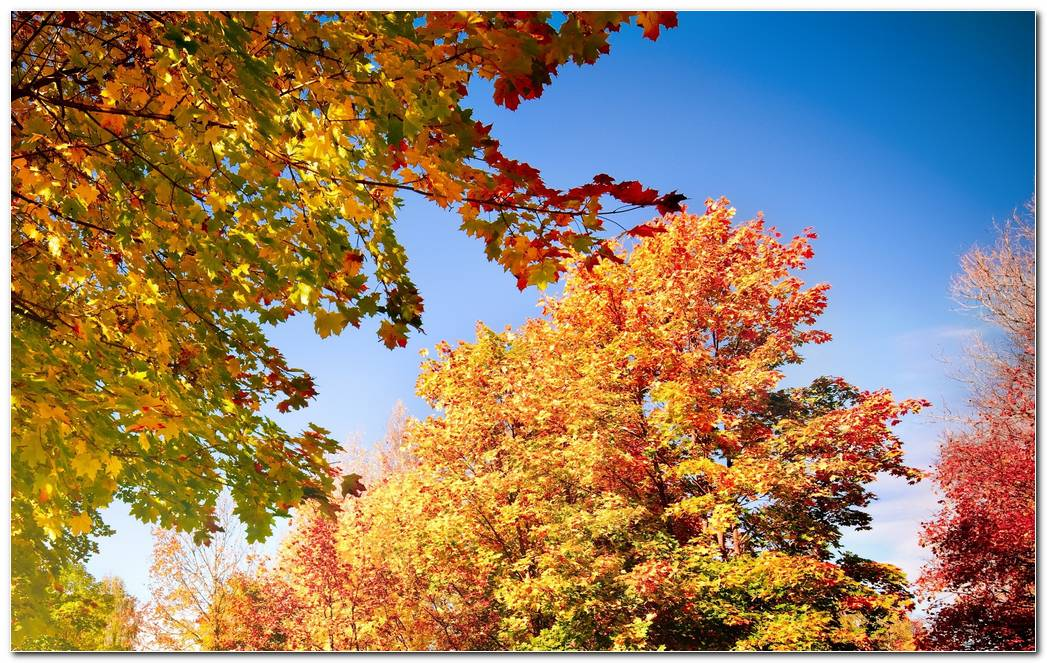 Trees Autumn Wallpaper Leaves