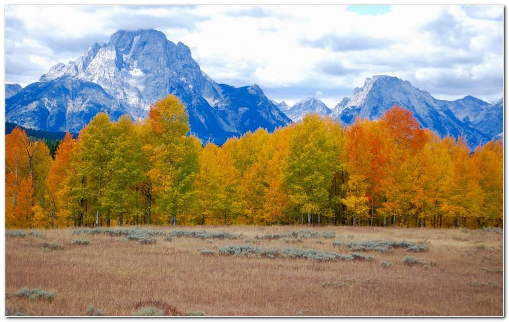 Trees Autumn Wallpaper Mountains