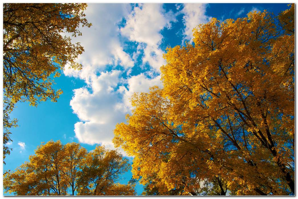 Trees Hd Autumn Wallpaper Image