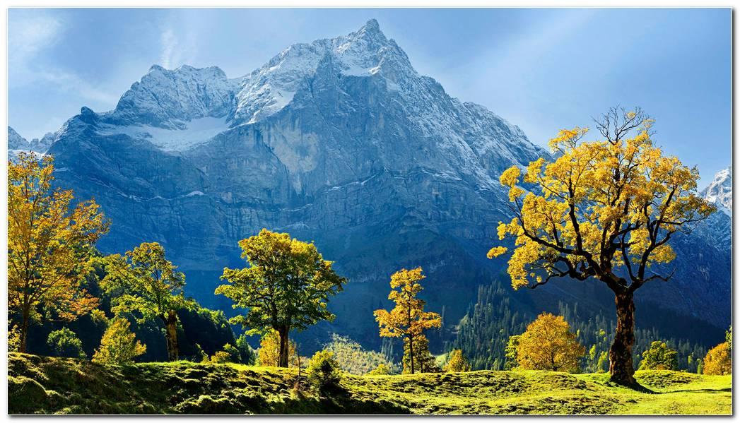 Trees Snow Nature Mountain Wallpaper Background