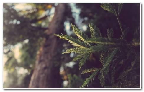 Trees of jungle HD wallpaper