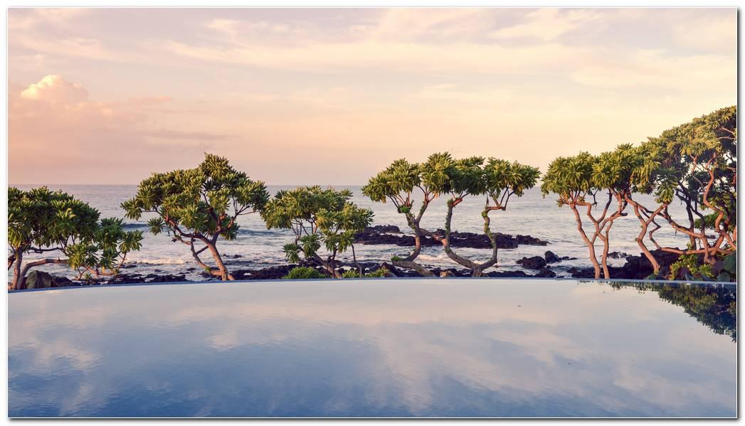 Trees On The Ocean Side HD Wallpaper