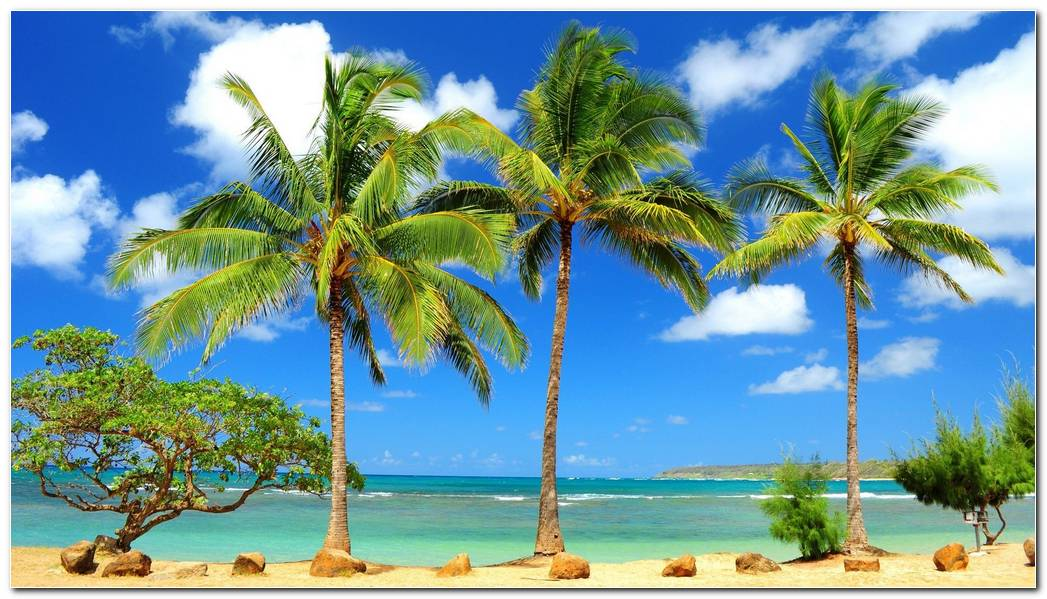Tropical Beach Hd Desktop Background