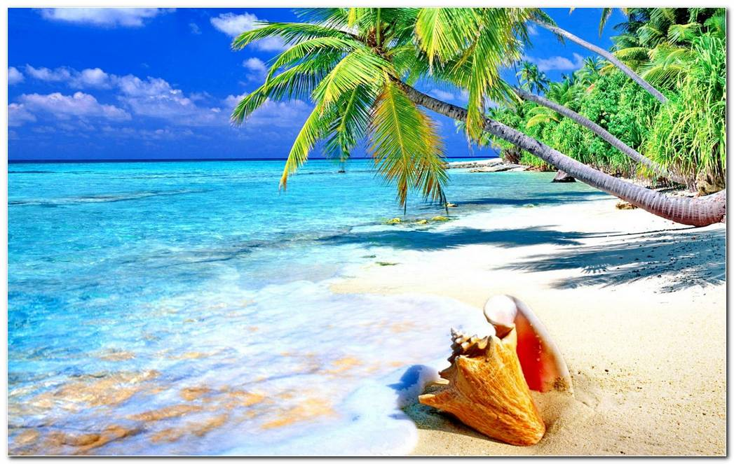 Tropical Sandy Beach Shell Ocean Wallpaper