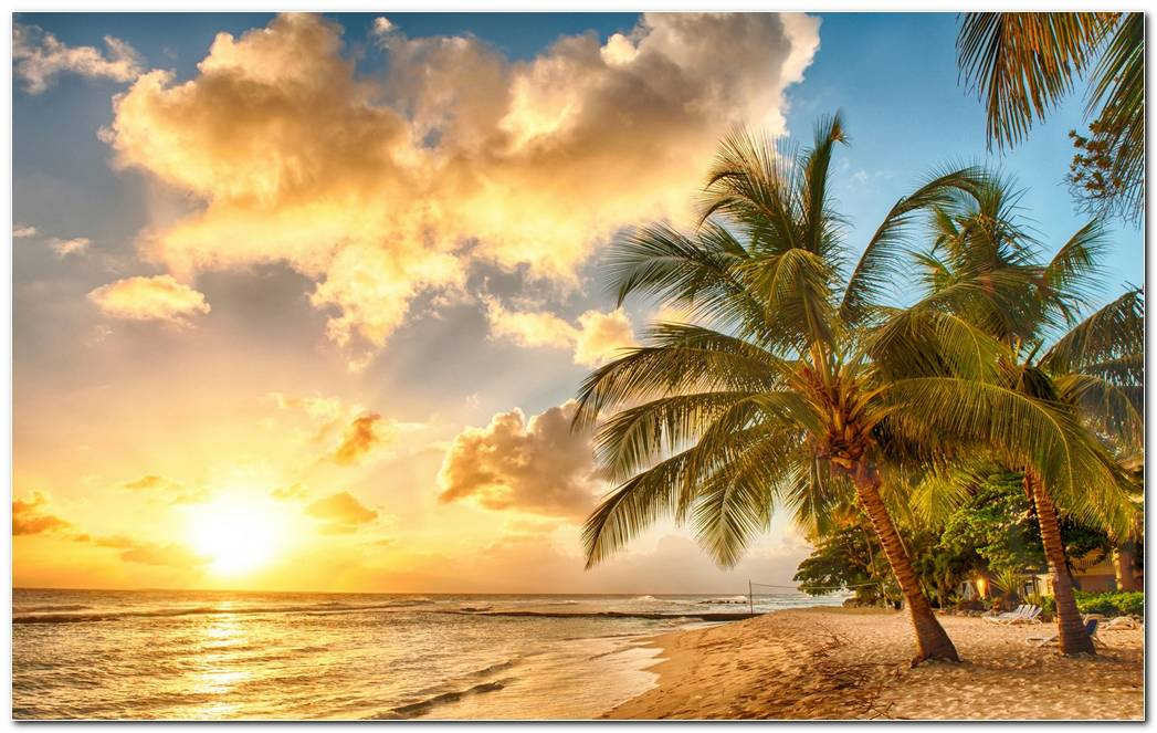 Tropical Sea Coast Palm Tree Sunset Wallpaper