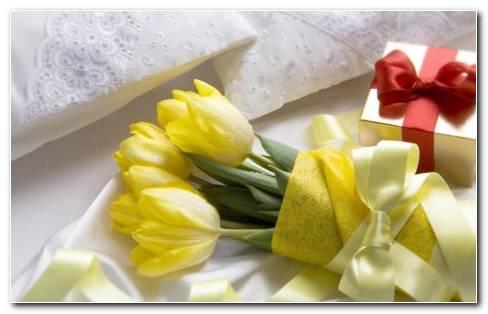 Tulipa Gesneriana HD Wallpaper