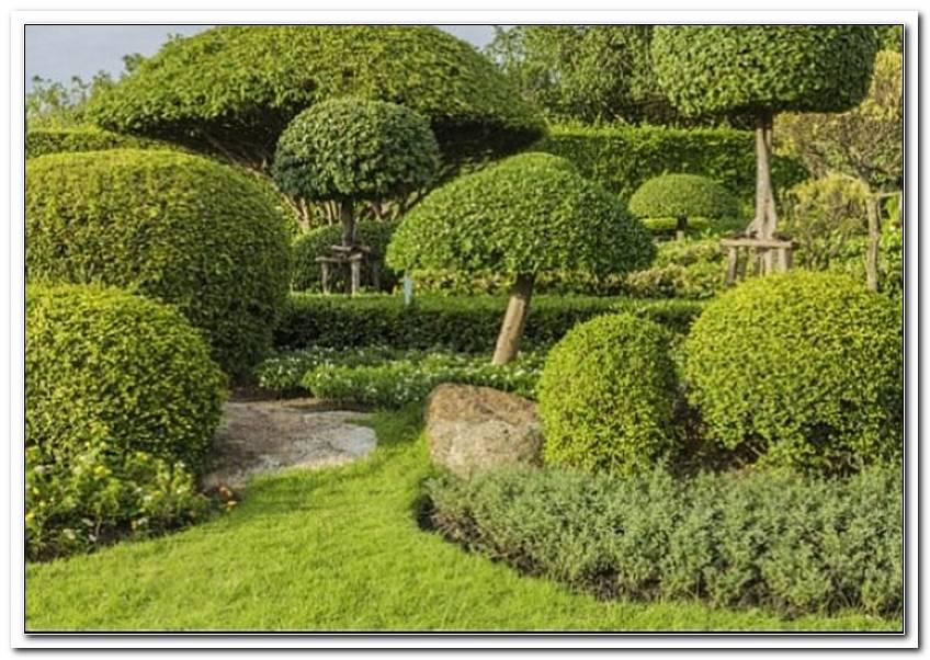 Typische Pflanzen Japanischer Garten
