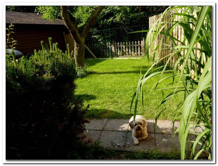 Urlaub Mit Hund Ostsee Eingez?Unter Garten