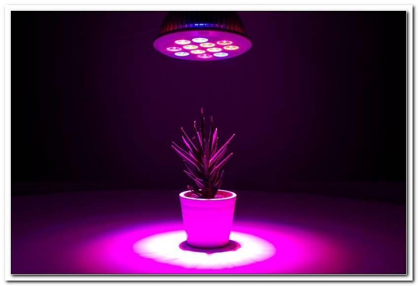Uv Lampe F?R Pflanzen