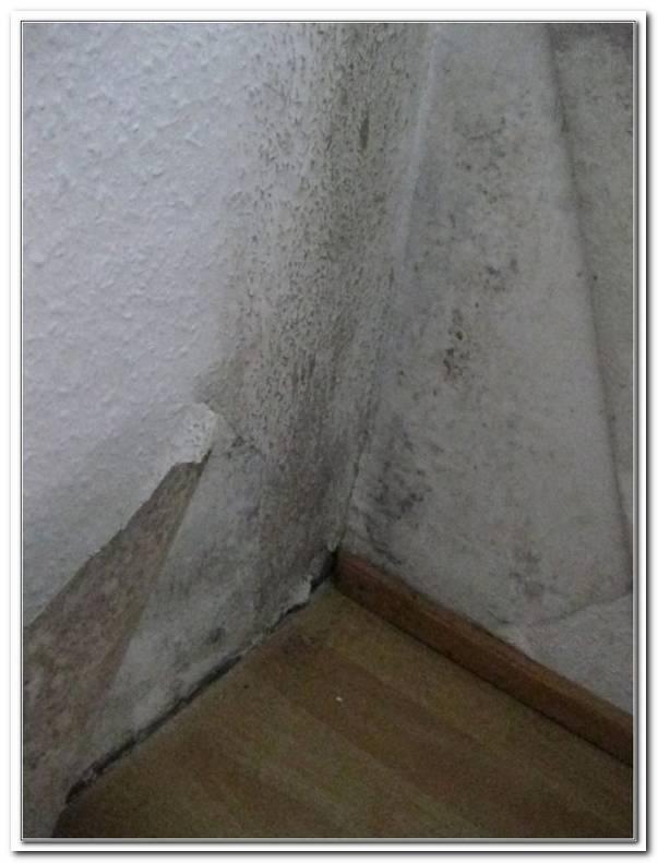 Was Kann Man Gegen Schimmel Im Schlafzimmer Tun