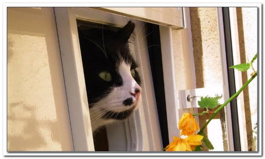 Was Kostet Es Eine Katzenklappe In Ein Fenster Einzubauen