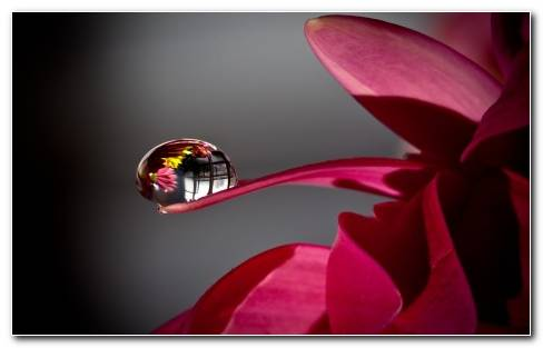Water Drop Flower HD Wallpaper
