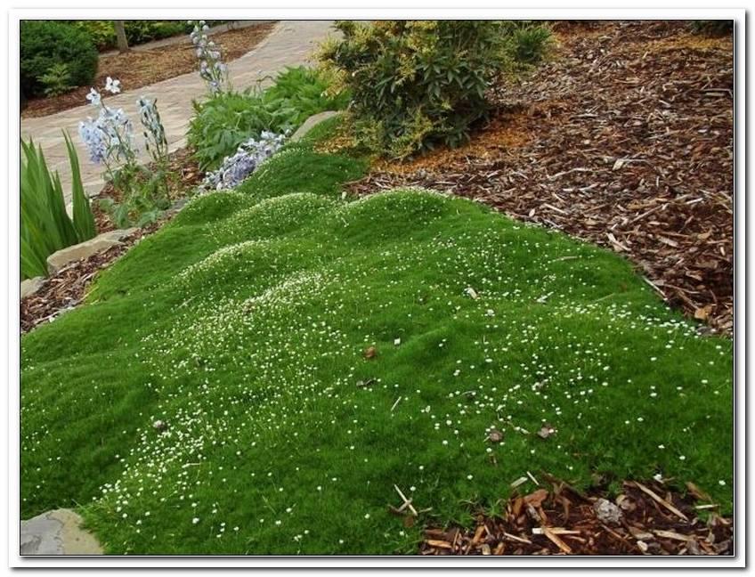 Welche Pflanzen FR Japanischer Garten