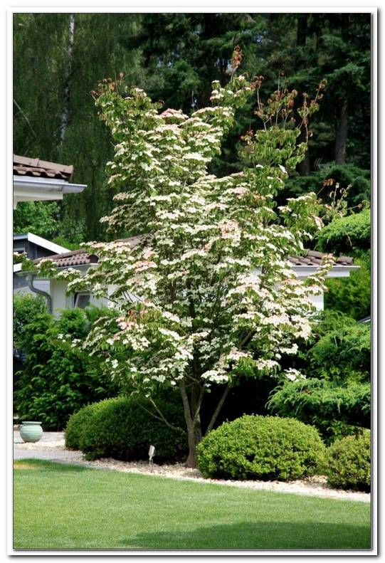 Welchen Baum Im Garten Pflanzen