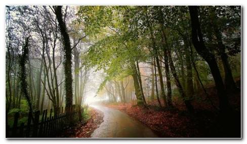 Wet Road Along The Forest HD Wallpaper