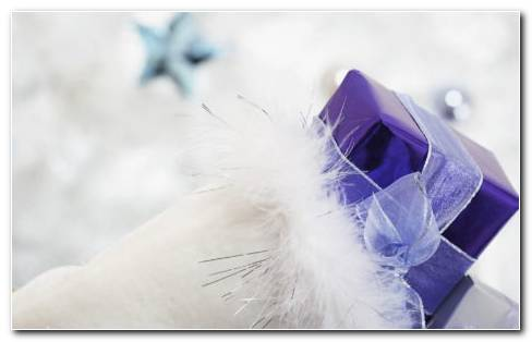 White Feather Gifts HD Wallpaper