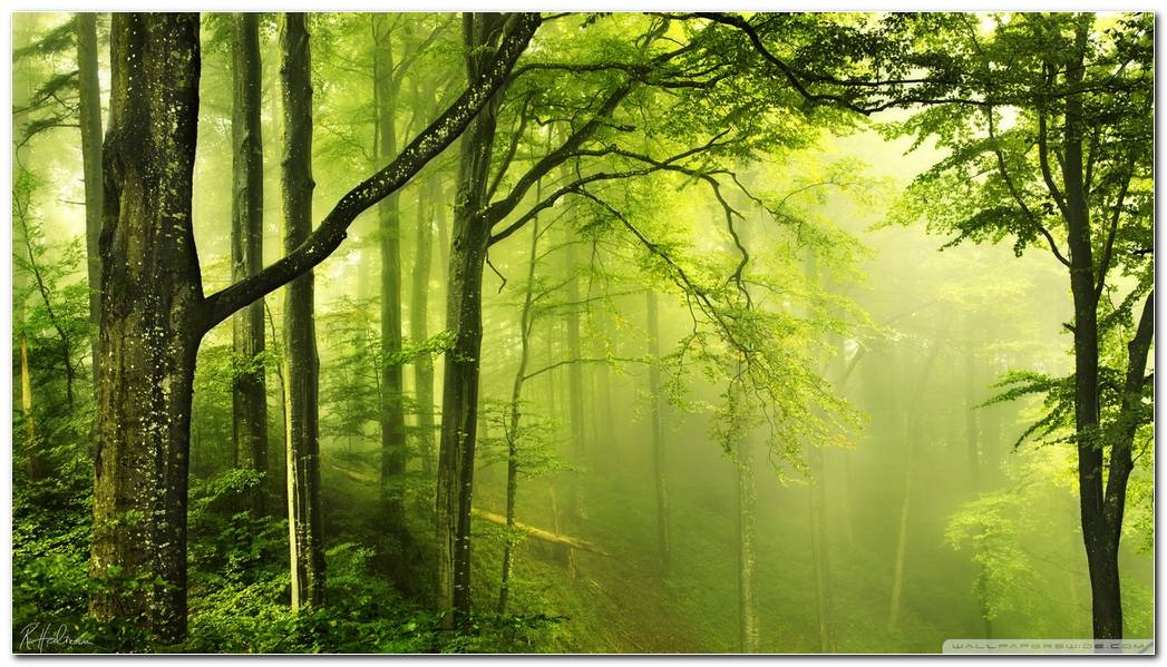 Widescreen Green Forest Nature Wallpaper Background