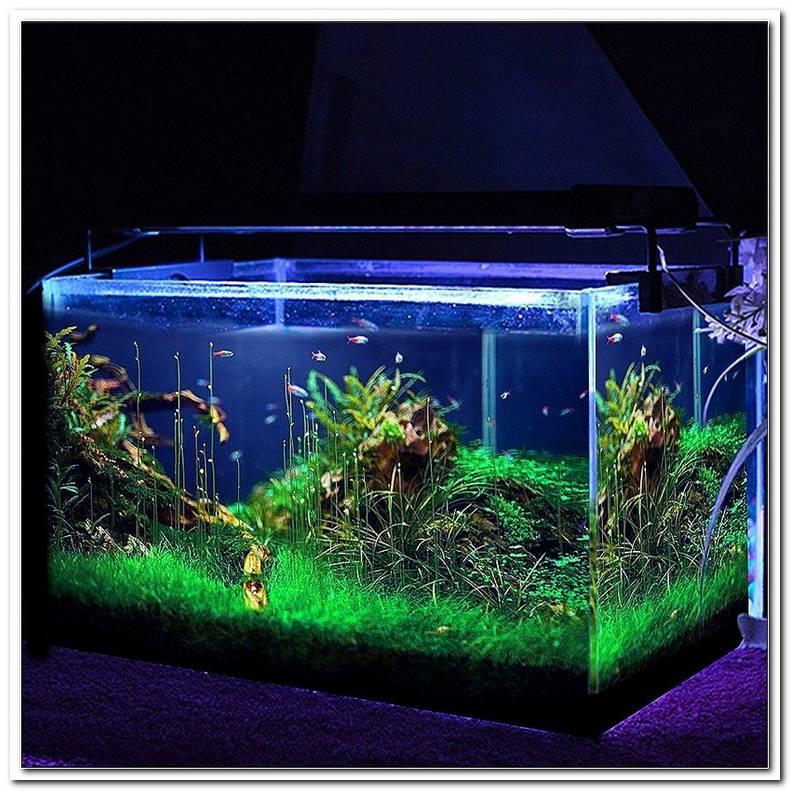 Wie Lange Beleuchtung F?R Aquarium