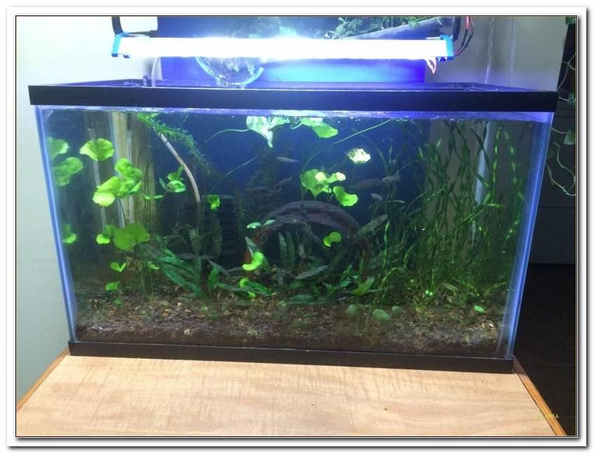 Wie Lange Beleuchtung Im Aquarium